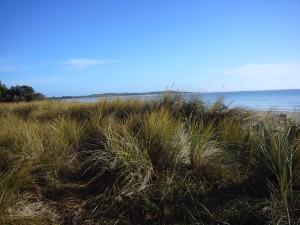 Sand Dunes Adams Beach