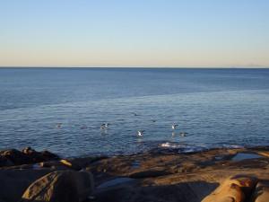 Anderson Bay and rocky shoreline