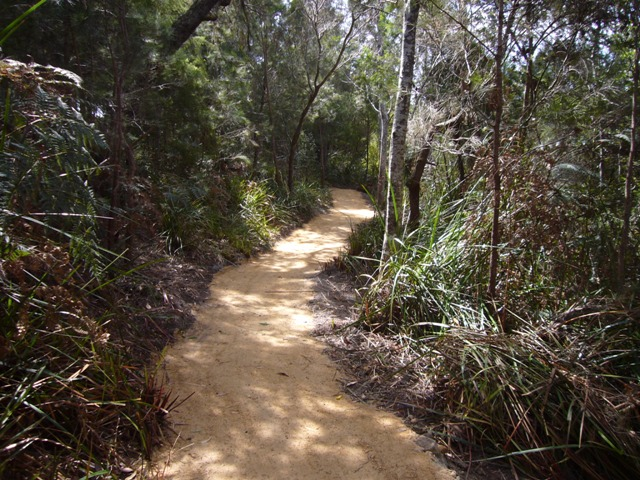 Completed track, Bridport Walking Track