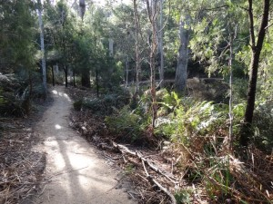 Tree Fern Gully, Bridport Walking Track