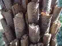 Closeup spiky fern