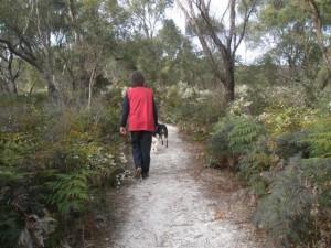 Wildflower Reserve, Bridport Walking Track