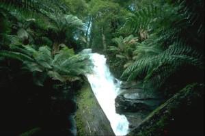 Cuckoo Falls