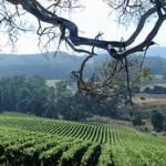 Wine route, Tamar Valley