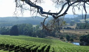 Wine route, Tamar Valley