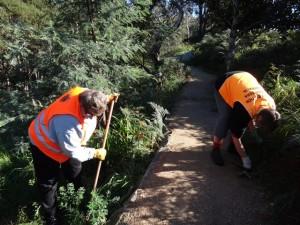 Bridport Tasmania, Bridport Walking Track, Bridport working bees